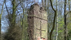 Derelict tower woodland close up cross trees ivy blue sky Stock Footage
