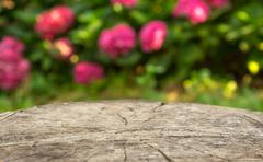 Blurry natural background Stock Photos