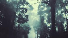 Smooth backward camera track through a dark forest - stock footage