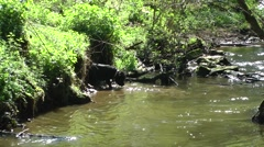 Dog playing in stream water flowing sunshine Stock Footage