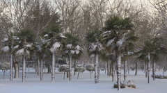 Snowing in Urban Public Park With Palm Trees Stock Footage