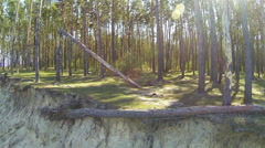 Fallen tree in  wood and coast of lake. Aerial rear fly Arkistovideo