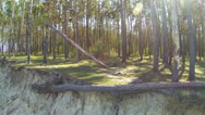 Stock Video Footage of  Fallen tree in  wood and coast of lake. Aerial rear fly
