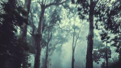 Camera track through a dark misty forest Stock Footage