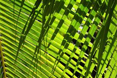 Palm leaves background with shadow - stock photo