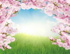 blooming tree brunches and  green grass - stock photo