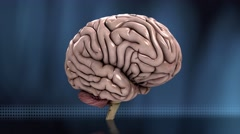 Analyzing the human brain dynamic loop blue 4K Stock Footage