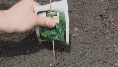 Stock Video Footage of planting chives in the garden