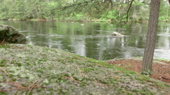 River in the Woods Stock Footage