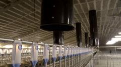 Farm for breeding pigs. Stock Footage
