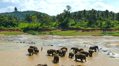 Elephant in the river - Sri Lanka Stock Footage