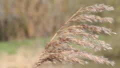 Blade of grass in the wind - stock footage
