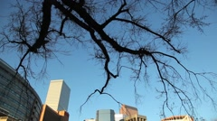 Denver downtown and dead tree Stock Footage