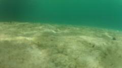 Underwater Sand in PALAU Stock Footage