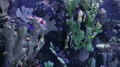 Aquarium in Turkey. Stock Footage