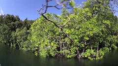 Edge of Mangrove Forest - stock footage