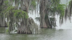 Cypress trees with moss handing from them over lake Stock Footage