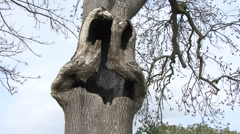 Damage to tree forms face of creature. Stock Footage