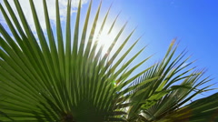 Palm tree leaves and blue sky Stock Footage