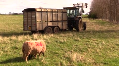 Tractor, lambs  and sheep  in the Scottish countryside Stock Footage