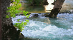 Tree in river. Stock Footage