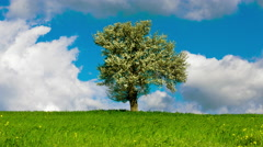 4K Spring/summer landscape tree on meadow sky and clouds timelapse 30p - stock footage