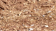 Tilting up over a large pile of pine garden mulch 4K Stock Footage