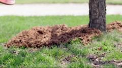 Garden mulch drops into frame from wheelbarrow 4K - stock footage