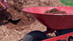 Filling wheelbarrow with pine garden mulch 4K Stock Footage