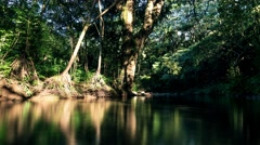 Tropical Rainforest Tree's Over Calm Jungle Stream in 4K (Timelapse) Stock Footage