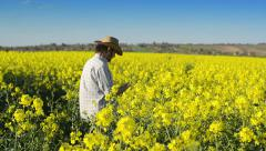 Farmer in Oilseed Rapeseed Cultivated Agricultural Field Stock Footage