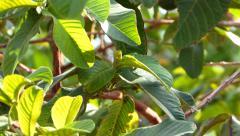 avocado tree - stock footage