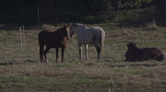 Group Of Horses In Slow Motion Germany Stock Footage