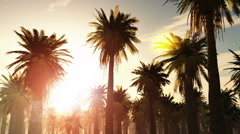Tropical jungle background with palm tree silhouettes at sunset - stock footage