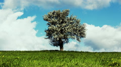 4K Spring/summer landscape tree on meadow sky and clouds timelapse 30p Stock Footage