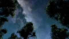 4K TIme Lapse of Stars and Silhouetted Pine Trees Stock Footage