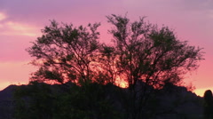 Palo Verde Tree silhouetted by a  sunset in the Superstition Mountains, Arizona Stock Footage