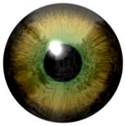 Stock Illustration of Detail of eye with olive green colored iris and black pupil