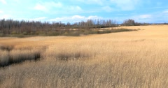 Common reed (Phragmites), early spring background, 4k Stock Footage