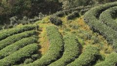 View to the tea plantation in Chiang Mai, Thailand. Stock Footage