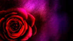 Gritty Textured Background with a Blooming Rose - stock footage