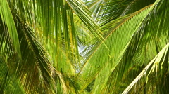 Coconut palm leaves Stock Footage