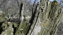 Snag in the spring Stock Footage