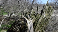 Snag in the wood Stock Footage