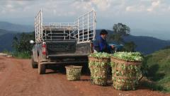 Man loads baskets with vegetables to the pickup in Chiang Mai, Thailand. Stock Footage