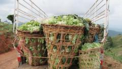 Pickup truck with vegetables departs from the plantation, Chiang Mai, Thailand. Stock Footage