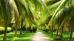 Beautiful alley between coconut palms Stock Footage