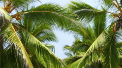 Heart shape from the leaves of coconut palms Stock Footage