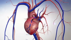 Human heart model Stock Footage