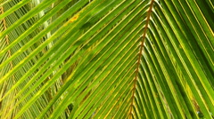 Palm leaves closeup background - stock footage